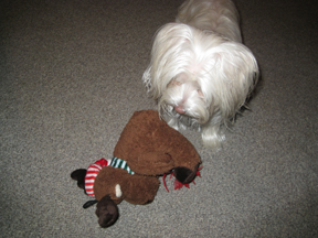 Bentley with her ChristmasBear